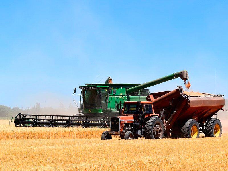 Аномально жаркое лето привело к потере 50% урожая в Камском Устье