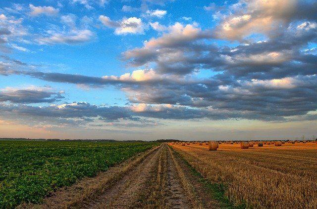 Правительство России направит 3,42 млрд рублей на производство масличных культур