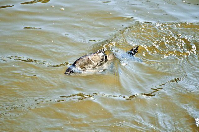 Более 90% проб воды в Татарстане имеют превышения концентраций загрязняющих веществ