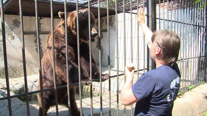 Медведи в зоопарке Казани охлаждаются мороженым и арбузами