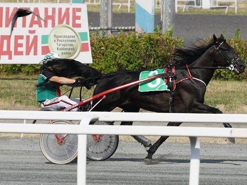 На Казанском ипподроме прошли скачки на пони - наездниками были дети