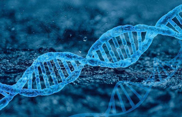 Казанский биолог о возможном вреде ГМО:  «У человека может быть аллергическая реакция вплоть до смертельного исхода»
