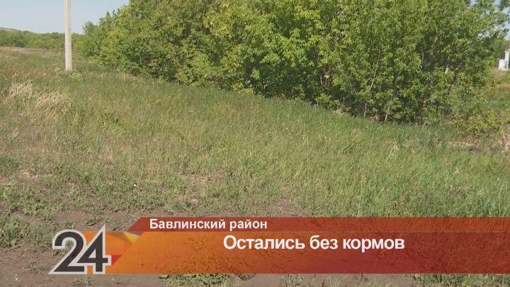 В Бавлинском районе фермеры остались без сена из-за односельчан