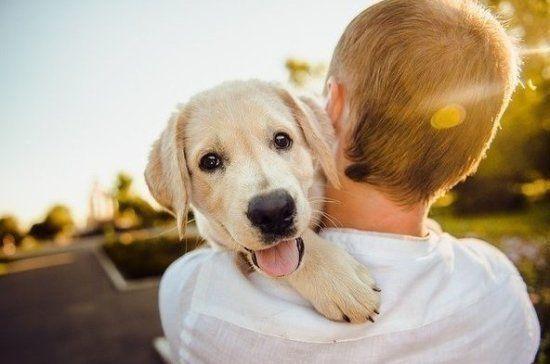 Мобильный пункт вакцинации и стерилизации собак развернется в казанском поселке Кадышево