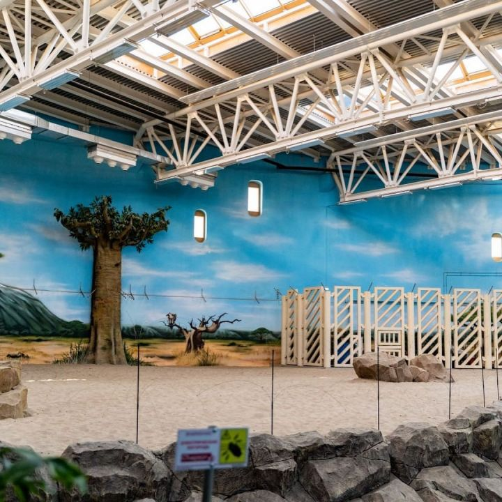 В казанский зоопарк «Река Замбези» в скором времени привезут слона