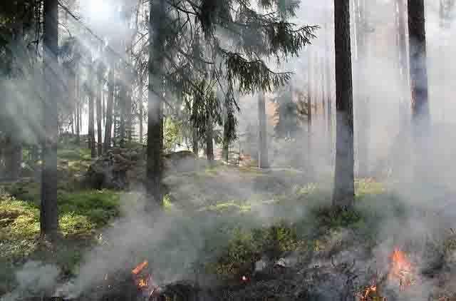 В Татарстане запретили посещение лесов из-за высокого риска возникновения пожаров