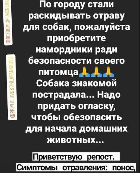 В Нижнекамске «активизировались» догхантеры