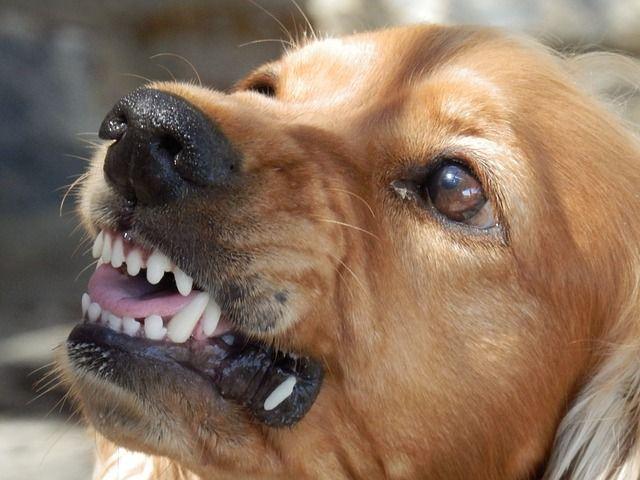 Собака загрызла свою хозяйку и набросилась на прохожих