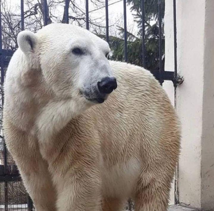 Старая часть казанского зоопарка закрывается до весны