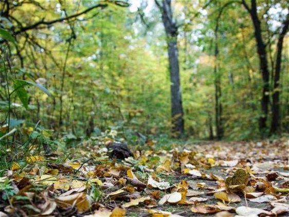 В Челнах местные жители нашли свалку из гнилых дынь и лука