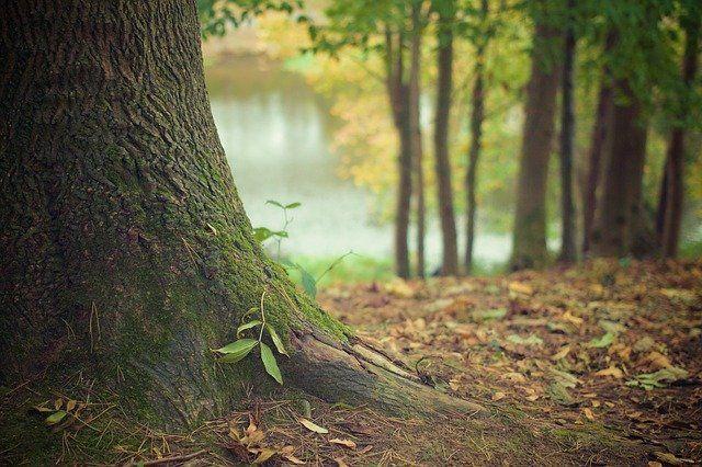 В Татарстане восстановили 1000 га леса