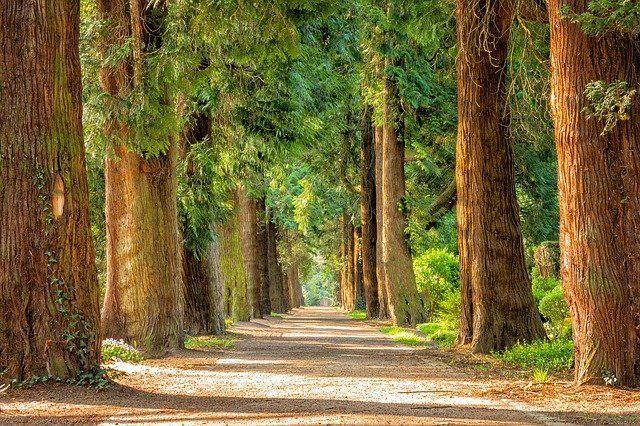 В Набережных Челнах вместо заброшенной школы высадят деревья