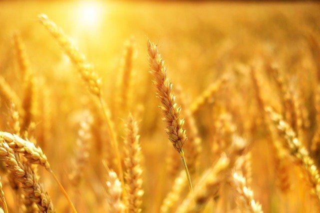Зарплата татарстанских аграриев выросла на 15%